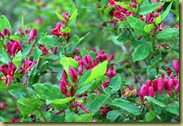 Bush with red flowers