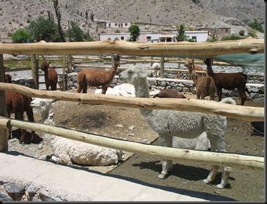 Llamafarm
