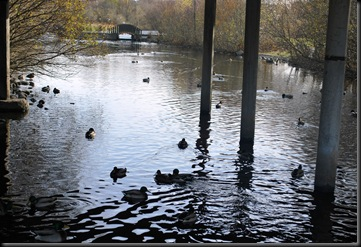 Østensjøvannet - fugler under broen