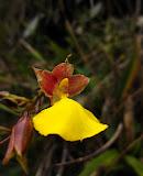 Ballgown flower