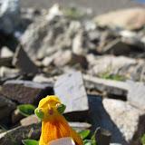 Alien flower growing in the rocks