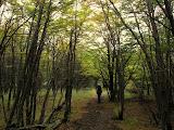 Forests near Refugio Grey