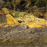Colourful rocks on the Islets of Chiloe