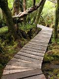 Tepu forest