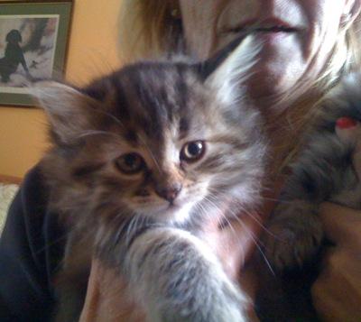 cat-pics-20.092010-015