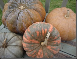 Heirloom_Pumpkins_003