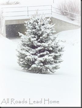 Snowy Tree2