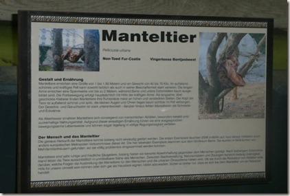 Manteltier 4