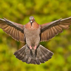 by Jan Fourie - Animals Birds