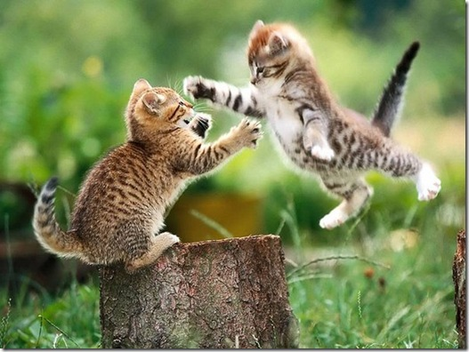 Attack_Cats_by_frenchlover91
