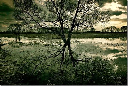 Alone_I_Break_by_angelreich