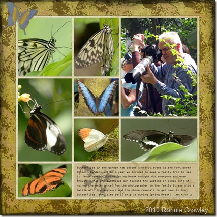 butterflies (Large)