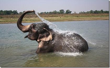 1.1237792980.elephant-bath