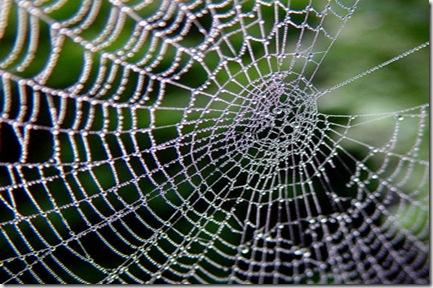spider_instinct