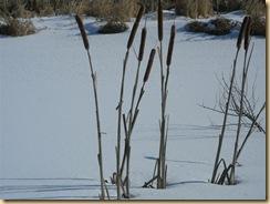 eagle marsh, feb 1, 09 (7) (Medium)