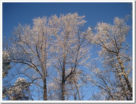 December 2010 014