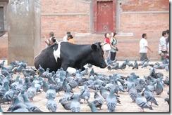 Nepal 2010 -Kathmandu, Durbar Square ,- 22 de septiembre   116
