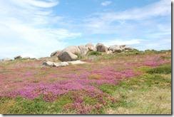 Oporrak 2010,-Ploumanach, Costa de granito rosa - 04