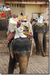 India 2010 -   Jaipur - Fuerte  Amber , 15 de septiembre   28