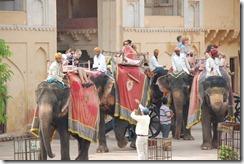 India 2010 -   Jaipur - Fuerte  Amber , 15 de septiembre   64