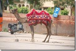 India 2010 -   Jaipur - Jal Mahal , 15 de septiembre   12