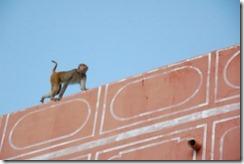 India 2010 -  Jaipur - Palacio del Maharaja  , 15 de septiembre   41