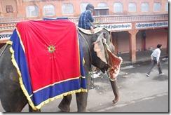 India 2010 -   Jaipur  , 15 de septiembre   14