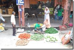 India 2010 -  Jaipur  , 15 de septiembre   56