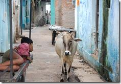 India 2010 -Kahjuraho  , 19 de septiembre   78