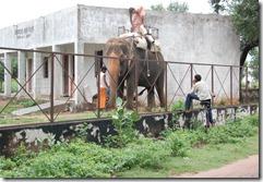India 2010 -Kahjuraho  , 19 de septiembre   85