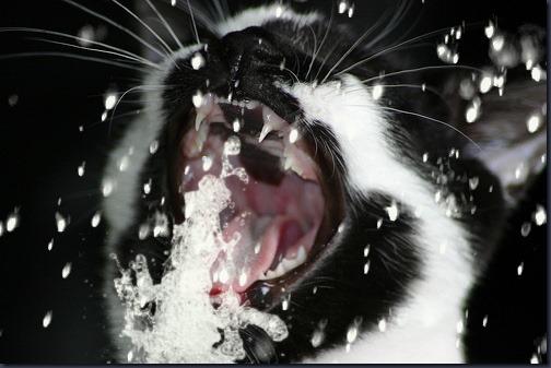 kittyhose