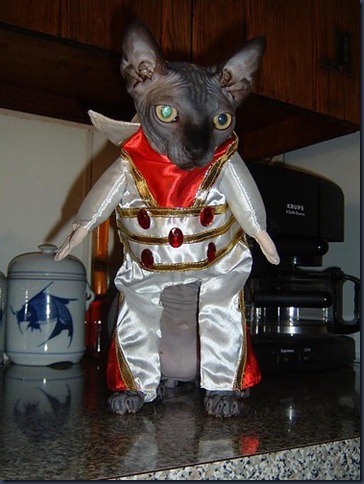 cats,elvis,presley,funny,cat,costume,elvis-52c622b3cb3239e59152428741761df0_h