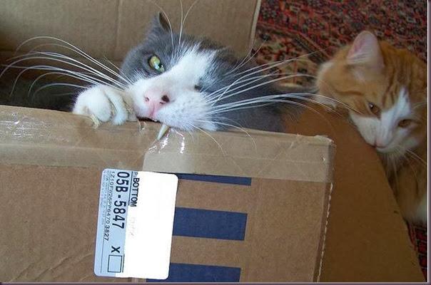 cardboardkitty