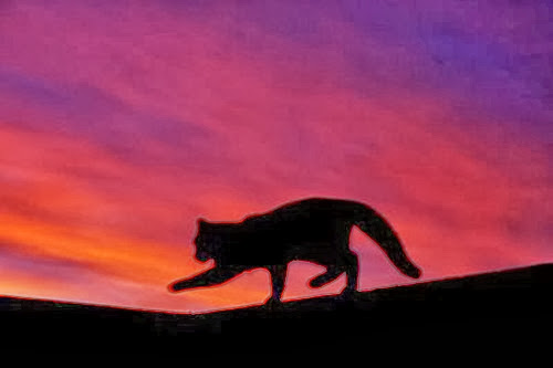 cat @ sunset