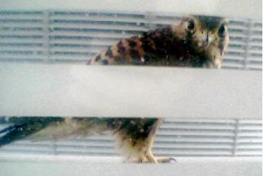 Falcon2-2004-06-29-10-46.jpg