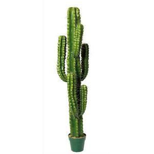 acheter mt international plante verte cactus colonnaire ou cierge hauteur 50 diam tre 13 cm. Black Bedroom Furniture Sets. Home Design Ideas