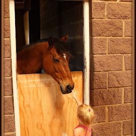 Hello horse by Romano Volker - Babies & Children Children Candids