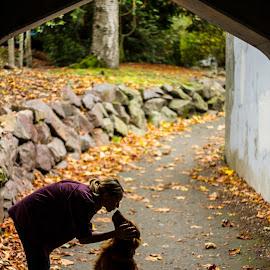 Mwah. by Matt Goodwin - Animals - Dogs Portraits ( love, kiss, dogs, golden retrivers, park, bridge, dog, golden retriever, fall, color, colorful, nature )