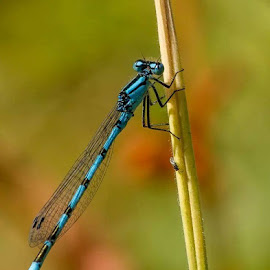 Damselfly by David Felstead - Nature Up Close Other Natural Objects
