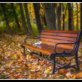 Falling Leaves by Jojo Garcia - City,  Street & Park  City Parks