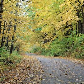 walking path by Christine Bartlett Csiszer - Landscapes Prairies, Meadows & Fields (  )