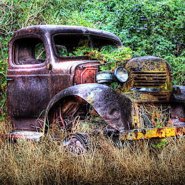 Truck and Vine by Eric Demattos - Transportation Automobiles ( farm, overgrown, truck, green, antique, classic )