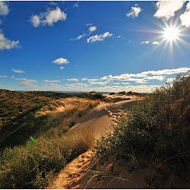 Foot-prints in the sand by Johann Perie - Landscapes Deserts ( footprints, desert, kalahari )