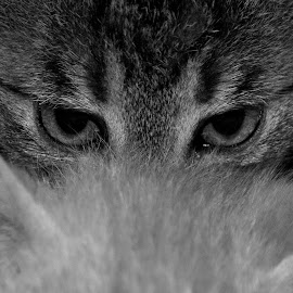 Eye  by Pradeep Sharma - Animals - Cats Portraits