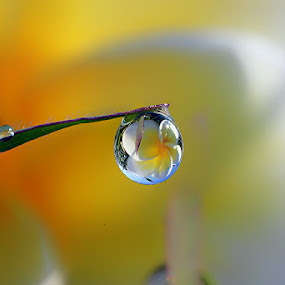 Big Dew by Dedy Haryanto - Nature Up Close Natural Waterdrops