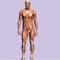 Spanish Medical Anatomy Guide