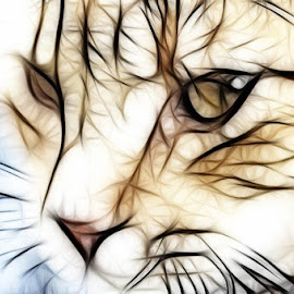 My cat by Stefania Loriga - Animals - Cats Portraits