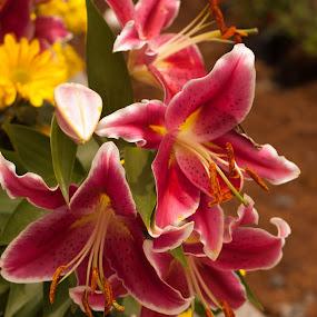 by Reagan Estrella - Flowers Flower Gardens