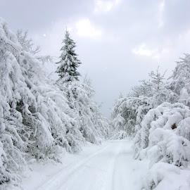 Snow by Slobodan Bobo Kovac - Nature Up Close Trees & Bushes ( love, wild, winter, nature, village, cold, snow, way, enjoy, beauty,  )