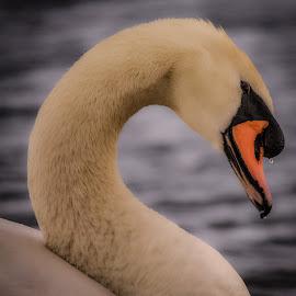 by Gary Seddons - Novices Only Wildlife
